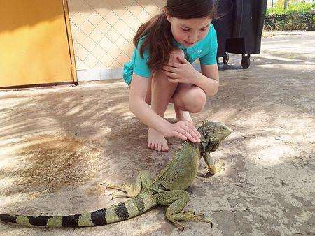 Insta-iguana4