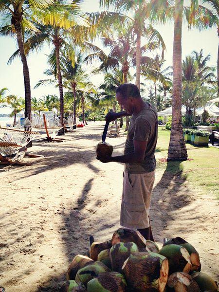 Insta-coconut
