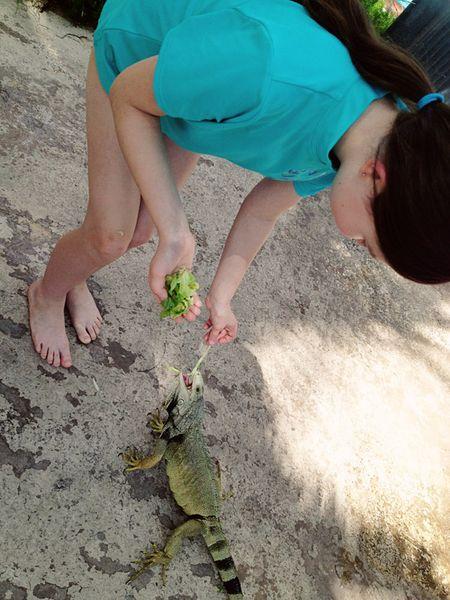 Insta-iguana3